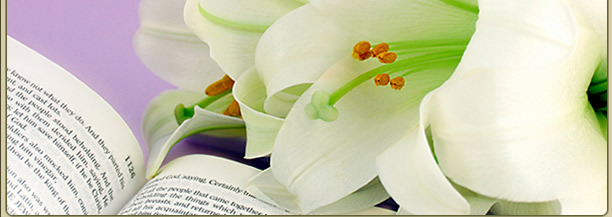 Picture of Easter lily
